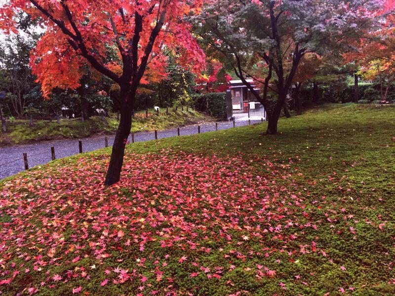 城南宮の紅葉その2