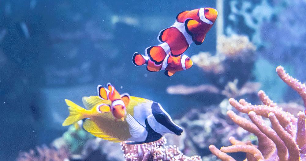 パソコンスクールの海水魚