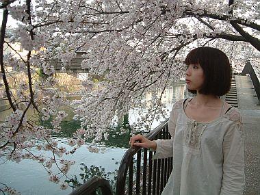 藤森駅の桜
