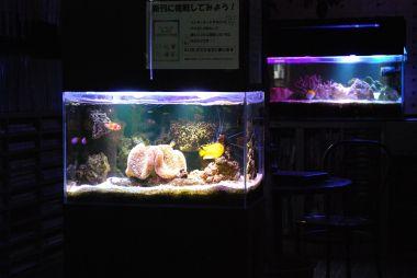 幻想的な海水魚