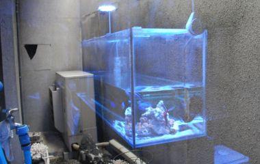 ガラスに映った水槽もきれい