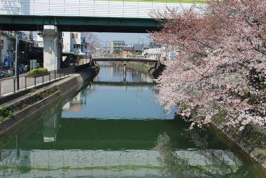 疎水の橋からみた風景