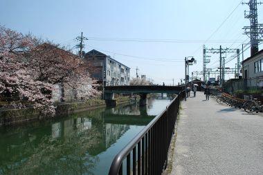 藤森駅疎水と桜